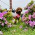 Meet Ku, Takigawa's August Pet of  the Month!